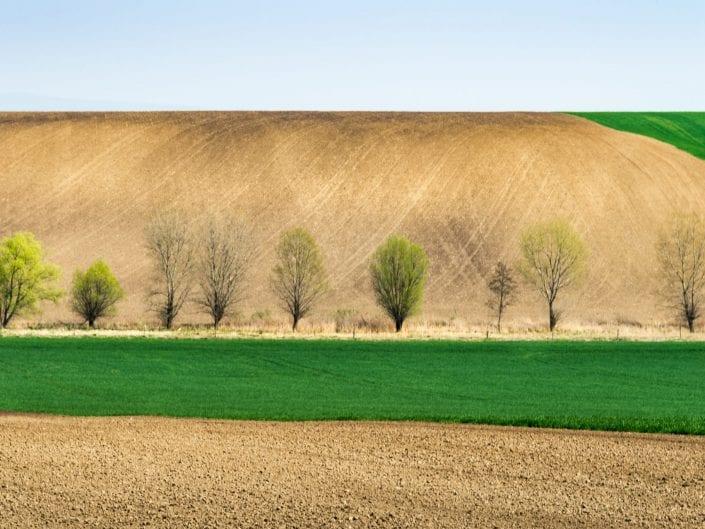 landscape, fields undulating rolling fields, agriculture, Moravia, Czech Republic, spring