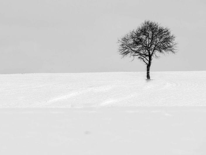 lone tree in snow landscape