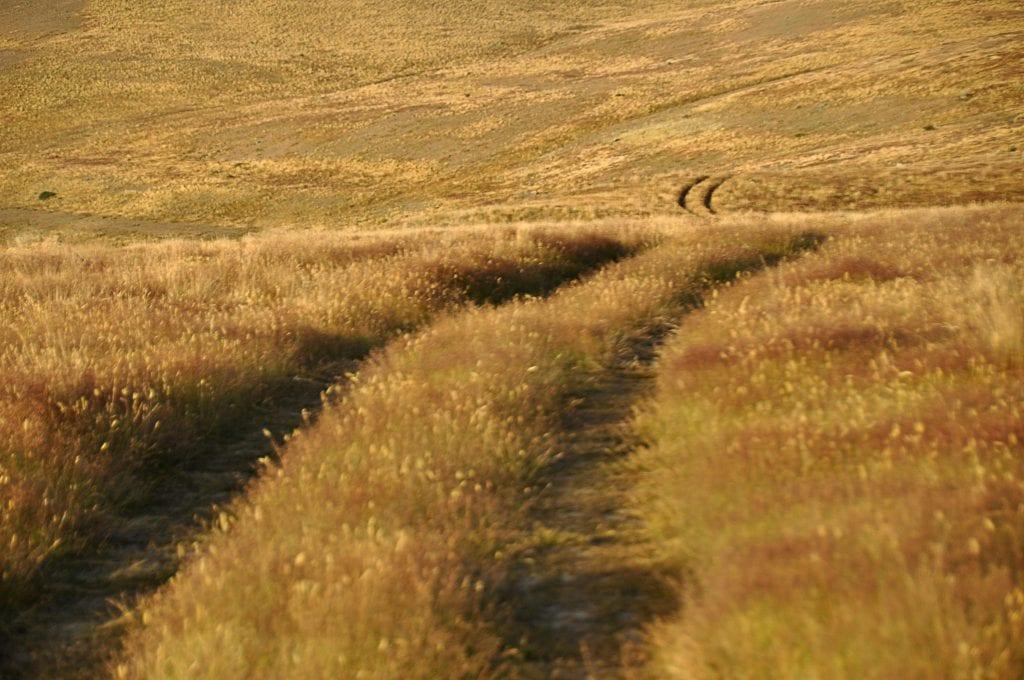 landscape photo, New Zealand, grass, wind , yellow,