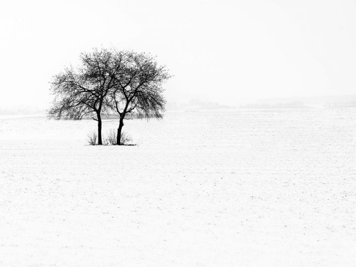 winterscape landscape Bierbeek Belgium twin trees