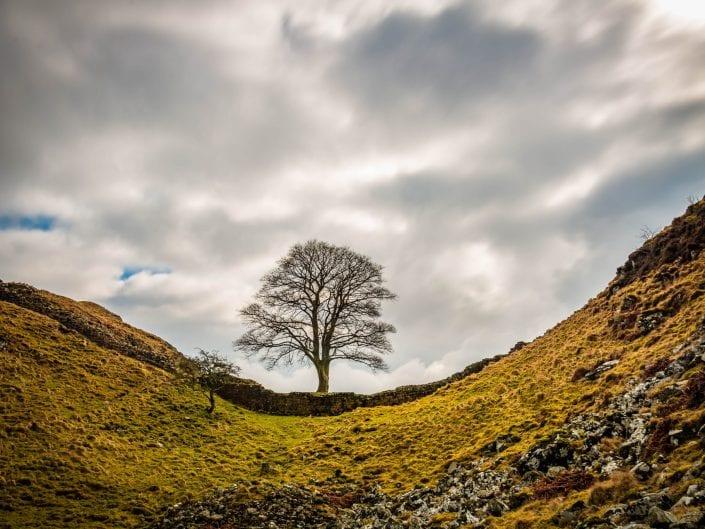 landscape photo, sycamore gap, Hadrians wall, united kingdom
