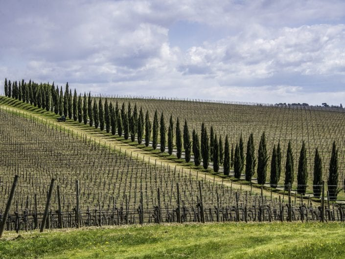 tuscany, italy, landscape photo, cypres, vineyard, tractor perspective, chianti