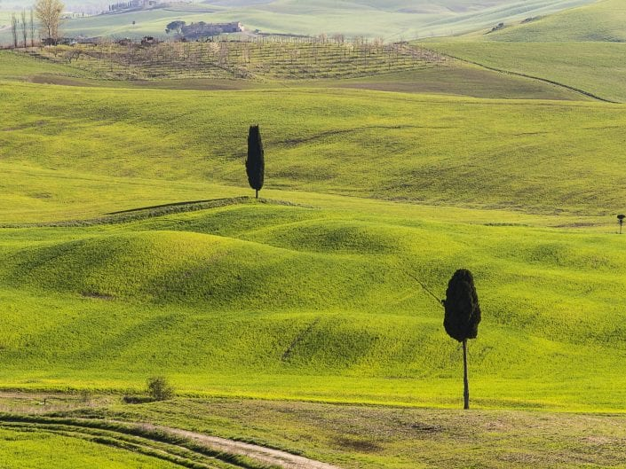 tuscany, italy, landscape photo, hills green fields, tree, agriculture, plowed, vineyard, grass, pasture