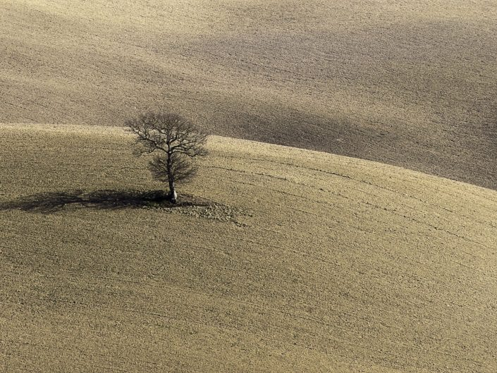 tuscany, italy, landscape photo, hills brown fields, tree, agriculture, plowed