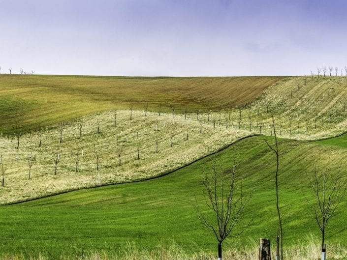a wave of a Moravian orchard