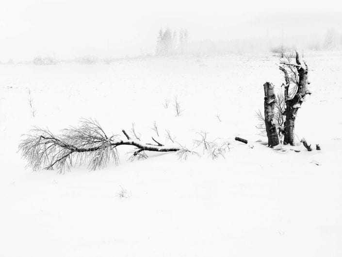 Snow covered minimalist broken tree in moorland at Noir Flohay with lots of burned trees in the mist of nature reserve High Fens / Hautes Fagnes /Hoge Venen in winter, Ardennes, Belgium black and white