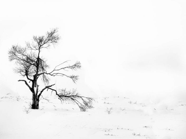Minimalist photo tree broken branch black and white in snow and mist