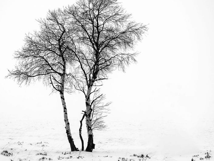 Snow covered trees in moorland at Noir Flohay with lots of burned trees in the mist of nature reserve High Fens / Hautes Fagnes /Hoge Venen in winter, Ardennes, Belgium