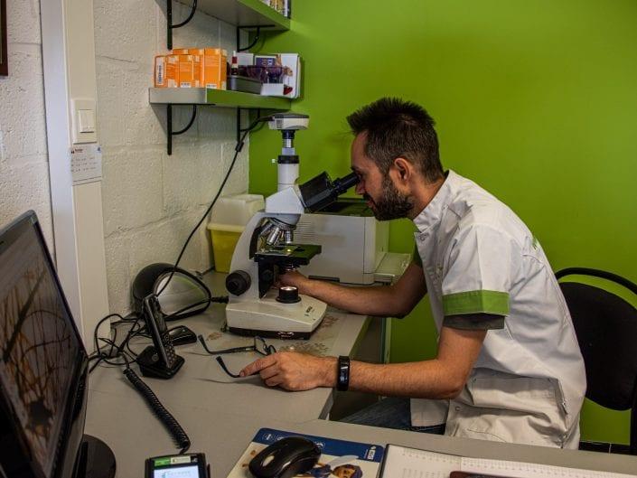 veterinary examining microscope