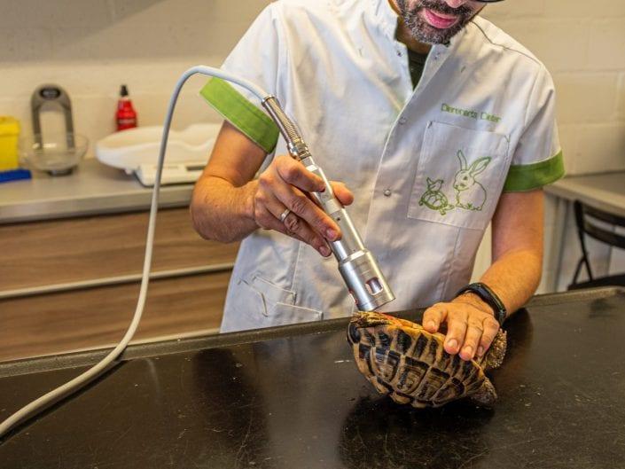 veterinary examining turtle