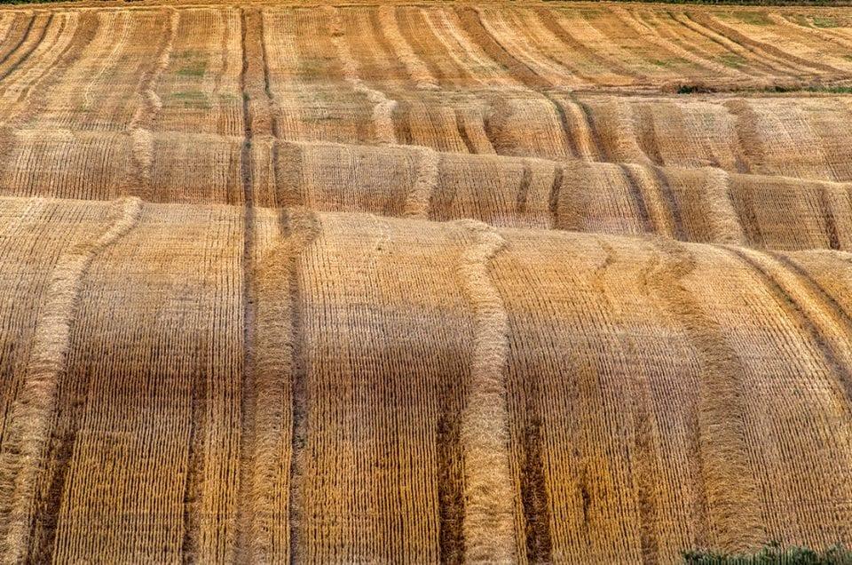 Colour in landscape photography Sweden fields