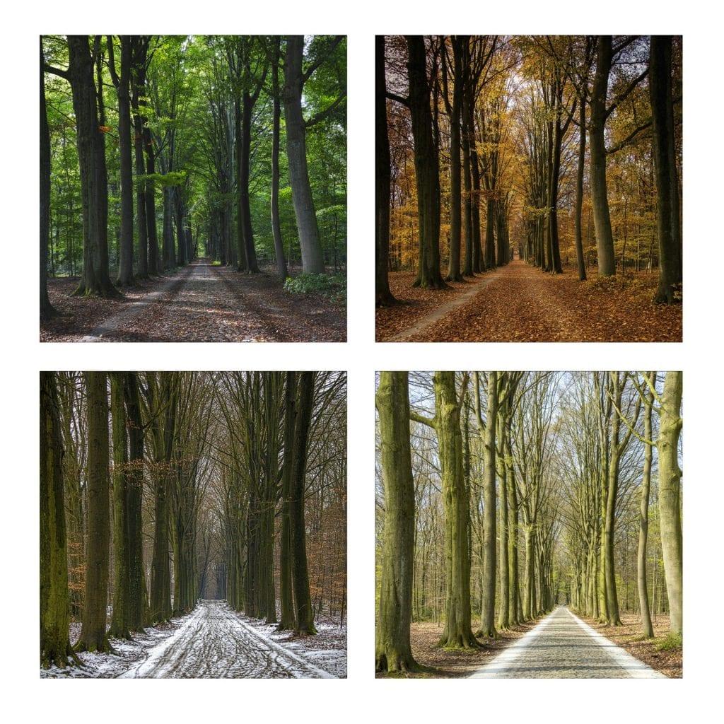 4 seizoenen landscape photography