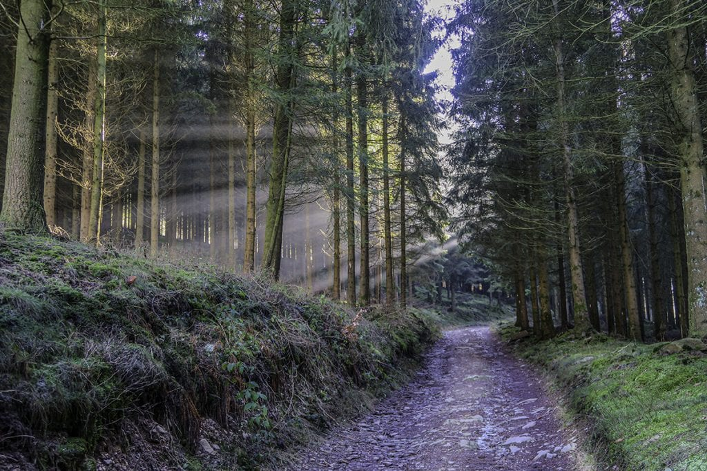 sunbeams photo forest