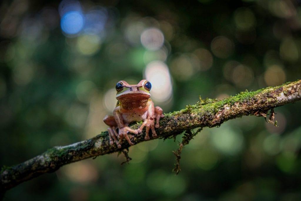 Frog close up photo