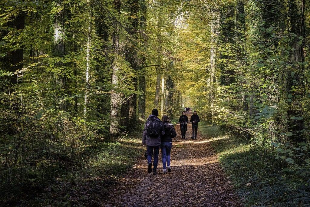Woodland landscape photography