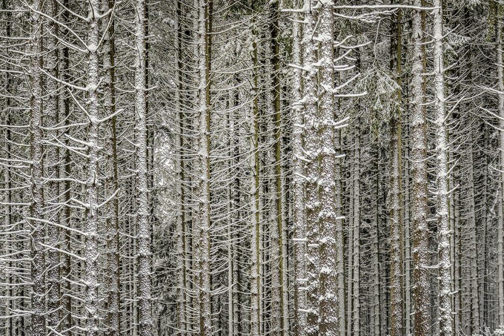 Woodland patterns photography