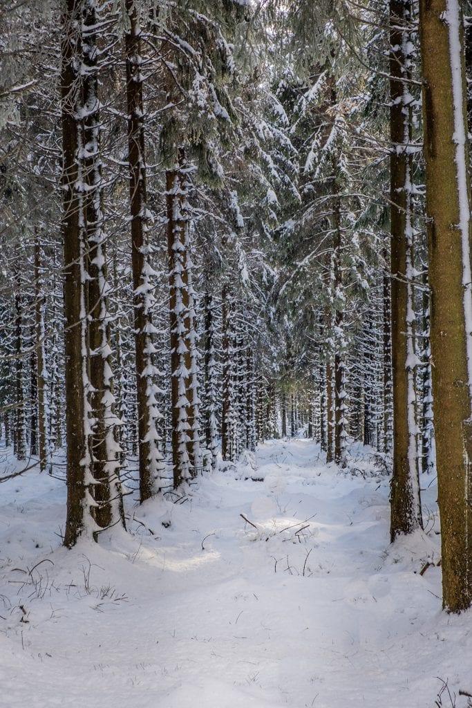 woodland trees snow winter depth