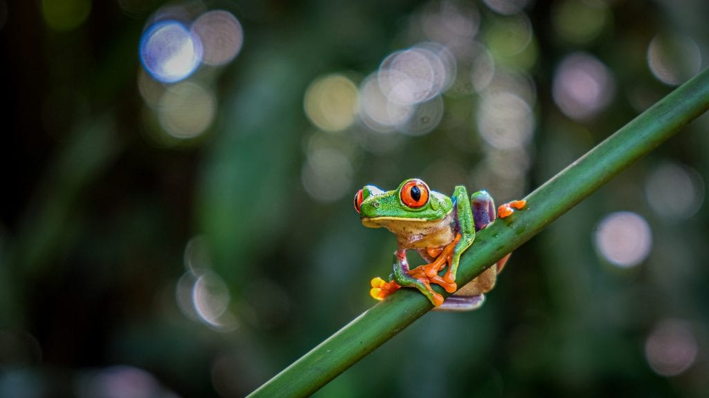nature photography frog
