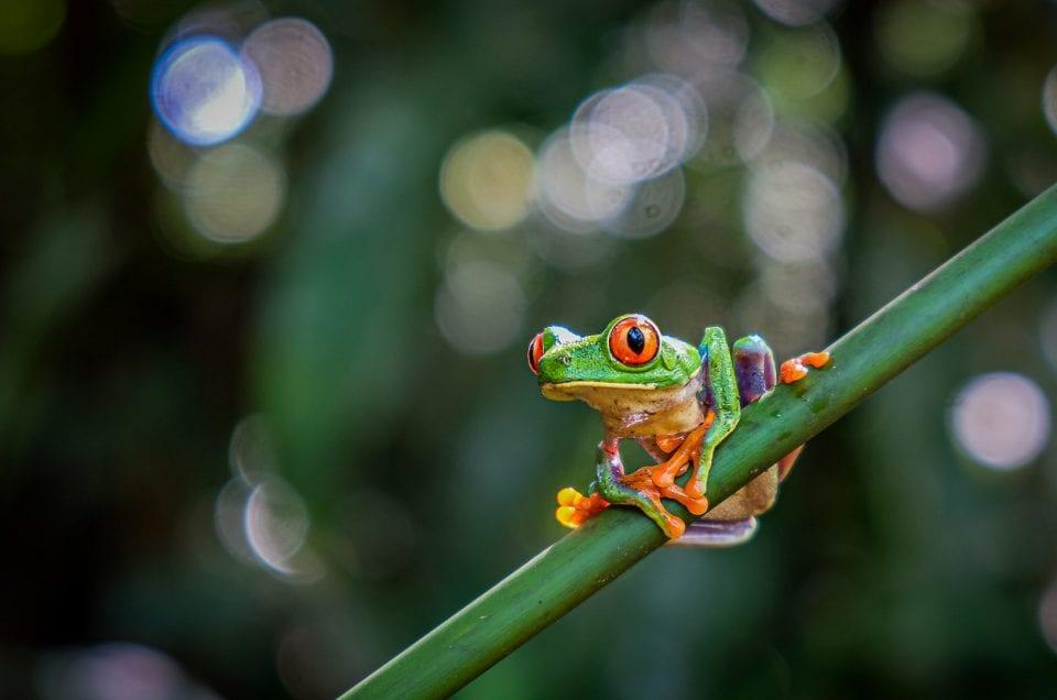 Tips voor buiten- en natuurfotografie