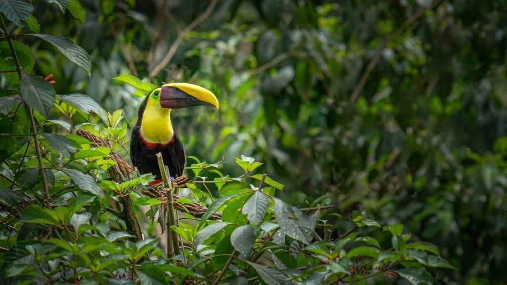 nature photography toukan
