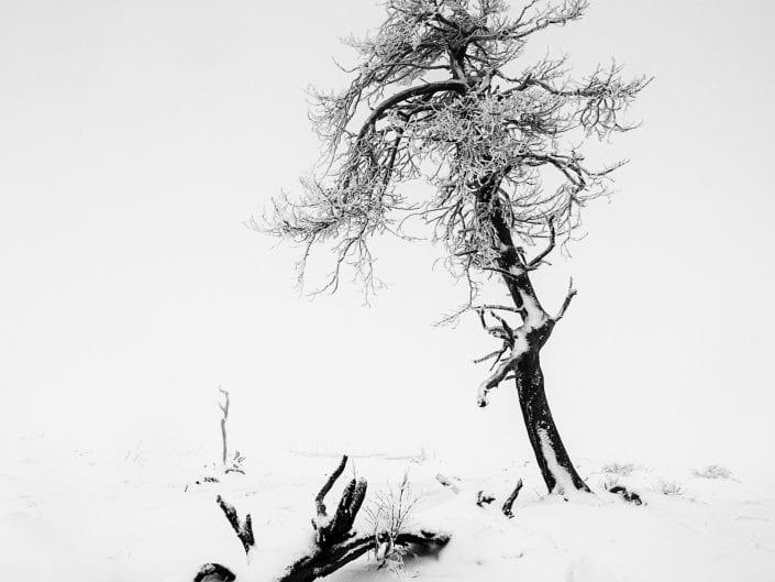 tree, snow, mist, minimal, abstract, black and white, landscape, winter, fine art, Noir Flohay, East Belgium