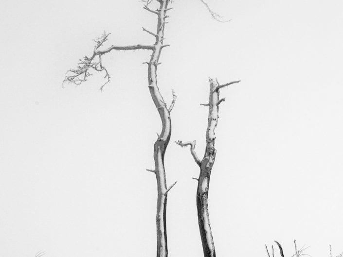 winter landscape on Noir Flohay, East Belgium, black and white, tree, snow, mist, fine art