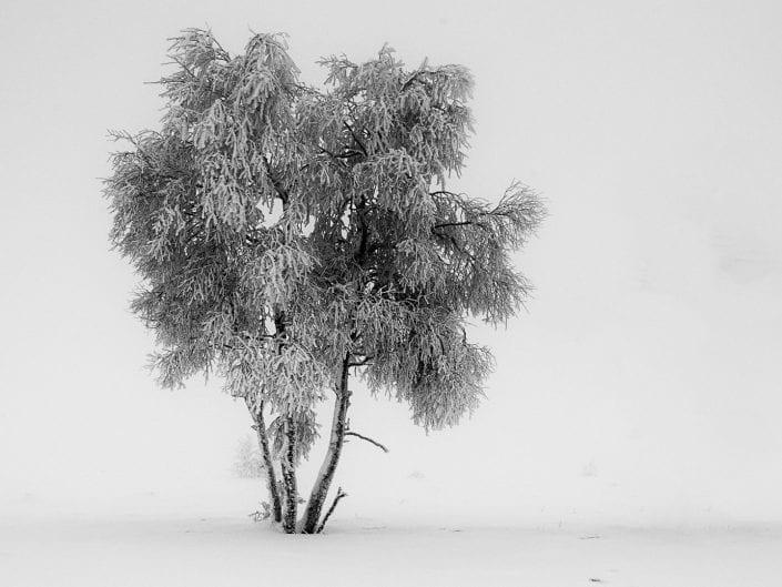 winter landscape, trees, snow, mist, Noir Flohay, East Belgium, fine art