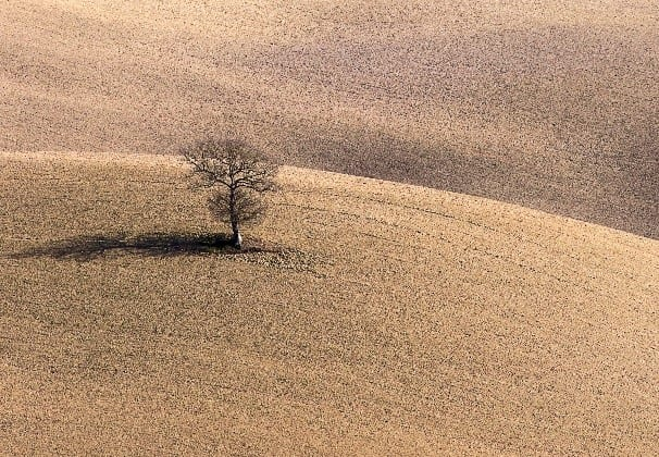 Lone tree in the brown fields of Tuscany