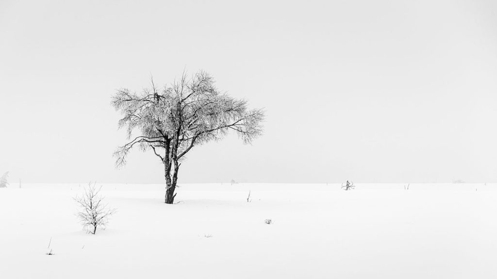 white negative space in black and white snow landscape Noir flohay East Belgium