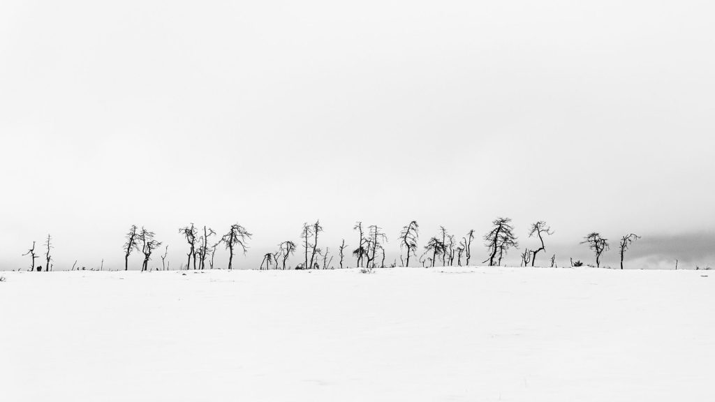 black and white landscape of simple tree slhouettes and lots of negative space on Noir Flohay East Belgium
